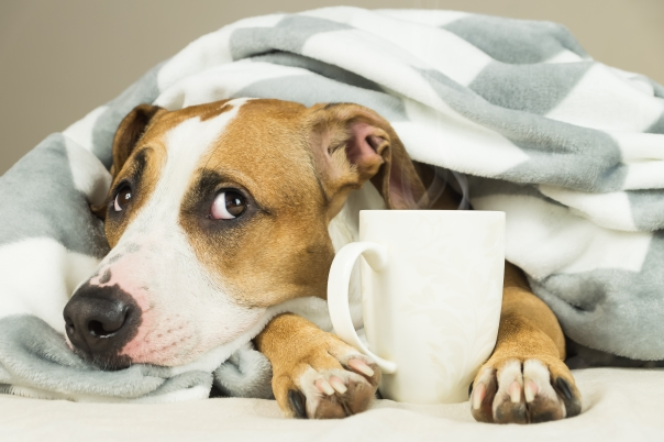 dog with tea.jpg